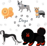 Dog collection. Stock Photography
