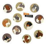 Dog collection. Vector set of 11 dog breeds. Geometric style icon Stock Image