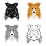 Dog, Collie breed, Scottish Shepherd. Muzzle Collie single icon in cartoon style vector symbol stock illustration web. Dog, Collie breed, Scottish Shepherd Stock Photography