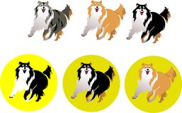 Dog Collie Stock Photography