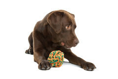 Dog with colorful ball Stock Photo