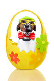 Dog in colorful easter egg Stock Image