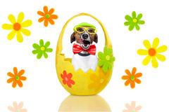 Dog in colorful easter egg Stock Photography