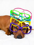 Dog and colorful glasses Stock Photography