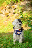 Dog with colorful neck scarf in the garden Stock Image