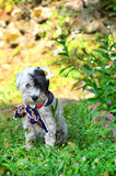 Dog with colorful neck scarf in the garden Stock Photography