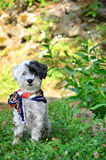 Dog with colorful neck scarf in the garden Stock Photo