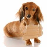 Dog communication Royalty Free Stock Photos