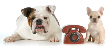 Dog communication Stock Photography