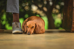 Dog Companion Stock Images