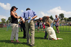 Dog Competition and Taming Challenge Royalty Free Stock Photo