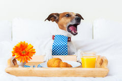 Dog  complaining Stock Photos