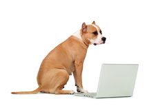 Dog and a computer. On an isolated background stock photos