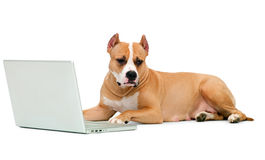 Dog and a computer. On an isolated background stock photo