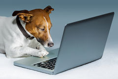 Dog computer Royalty Free Stock Photos