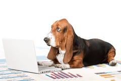 Dog. Computer Humor Animal Laptop Pets Working Stock Photos