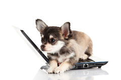 Dog and computer  isolated on white background Stock Photo