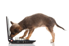 Dog and computer  isolated on white background Royalty Free Stock Image