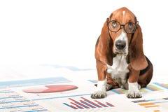 Dog. Computer Pets Shopping Animal Laptop Humor Stock Image