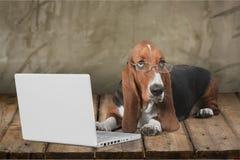 Dog. Computer Pets Shopping Animal Laptop Humor Royalty Free Stock Image