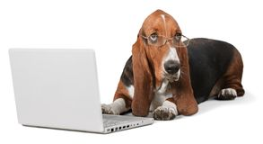 Dog. Computer Pets Shopping Animal Laptop Humor Stock Photos