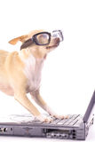Dog on computer reading emails. Photo of a dog on computer reading emails Stock Photos