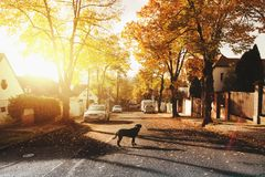 Dog on Concrete Road Royalty Free Stock Image