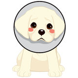 Dog With Cone. Cute little sad dog with cone of shame as injury protection Royalty Free Stock Photos