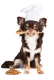 Dog in a cook hat holding spoon with food Stock Photography