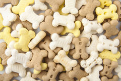 Dog cookies Royalty Free Stock Image