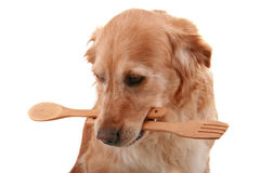 Dog cooking Royalty Free Stock Images