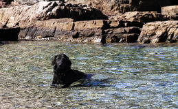 Dog in the cool sea Royalty Free Stock Images