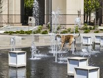 A dog cooling off on a hot day. Time to cool off in the water fountain on this very hot day Royalty Free Stock Photography