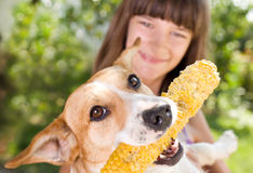 Dog with corn in mouth Royalty Free Stock Photo