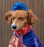 Dog in costume Stock Photo