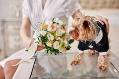 Dog costume groom smelling bouquet in hands of bride. Dog costume groom smelling bouquet of bride Royalty Free Stock Photography