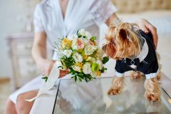 Dog costume groom smelling bouquet in hands of bride. Dog costume groom smelling bouquet Royalty Free Stock Photo