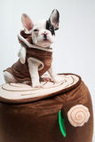 Dog on Costume. Puppy / dog wearing a costume Royalty Free Stock Photos