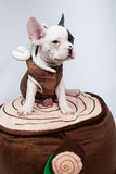 Dog on Costume. Puppy / dog wearing a costume Royalty Free Stock Images