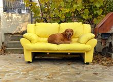 Dog on couch Royalty Free Stock Photos