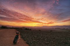 Dog in country at sunrise. Dog looking at sunrise over autumnal fields in countryside Stock Image