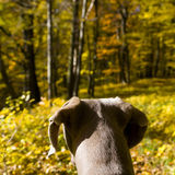 Dog in countryside Stock Photo