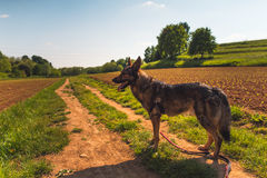 Dog and countryside stock image