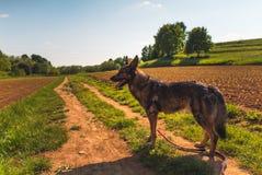 Dog and countryside Stock Image