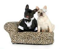 Dog couple stock photos