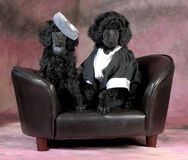 Dog couple Royalty Free Stock Images