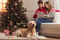Dog and couple using laptop Royalty Free Stock Photography