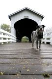 Dog on covered bridge Oregon Rural Road Stock Photos