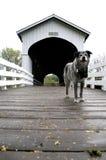 Dog on covered bridge Oregon Rural Road Stock Photos