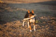 Dog with cow bone